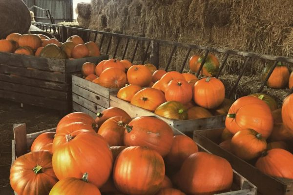 Pumpkins Leicestershire
