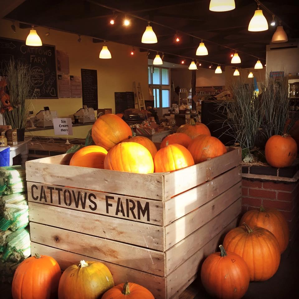 UPick pumpkins Leicestershire
