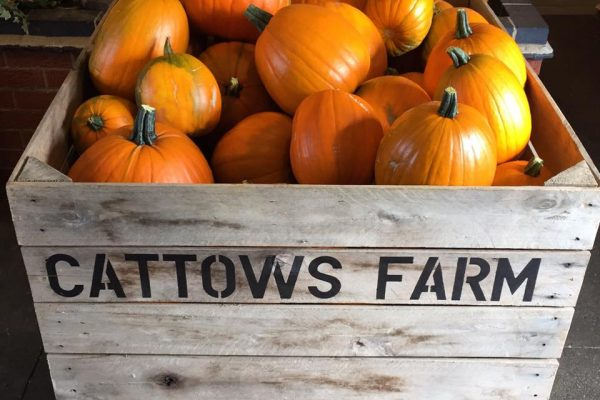 Cattows Farm Pumpkins Leicester