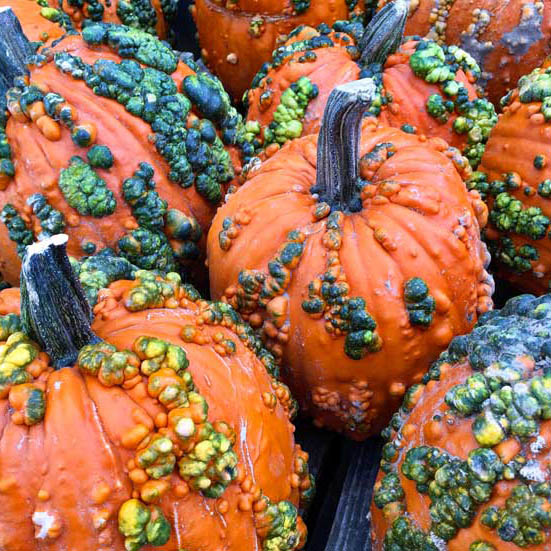 Knucklehead pumpkins Leicester