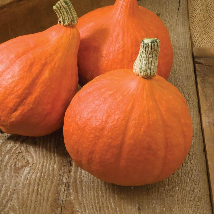 Kuri pumpkins Leicester