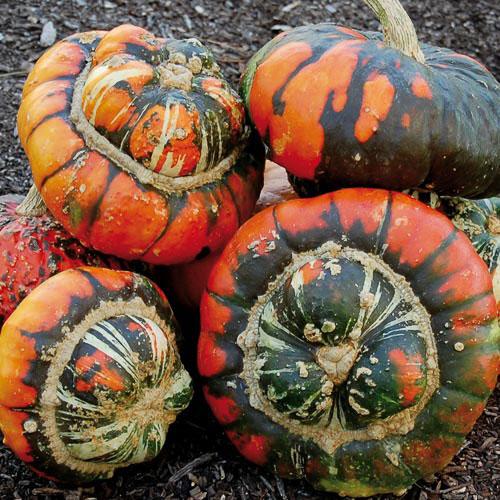 Turks turban pumpkins Leicester